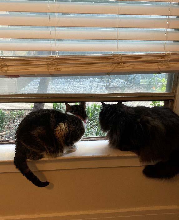 Macey Taylor cats